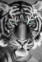 Eye Of The Tiger by adani525