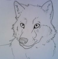 .: WOLFIE HEADSHOT :. by NatterJay