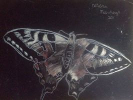 Butterfly (Scratchboard) by CeraLuna