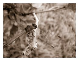 thedragonFly by gostOne