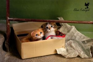 little homeless kittens by KittenBlackUA