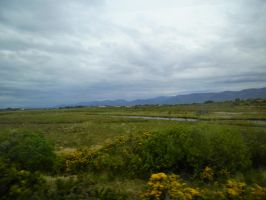 Gorse and Bogs by TheBuggiest