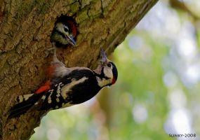 Woodpecker and chick by Slinky-2012