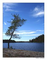 view - Red Pine Lake by fragilemuse-org