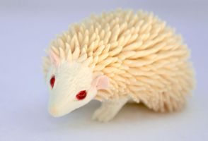 White hedgehog by hontor