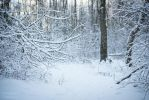 Winter forest by Kelshray-photo
