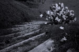 Follow the flowers by emy-hobbies