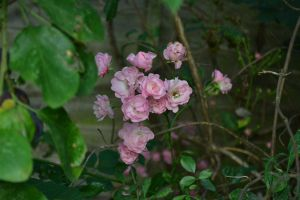 Pink by sophierevell