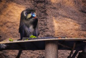 Guenon Snack Time by servilonus