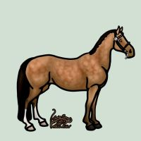 Buckskin Dressage Horse by SavingSeconds