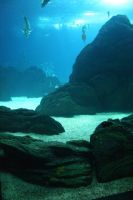Aquarium Stock 26 by Malleni-Stock