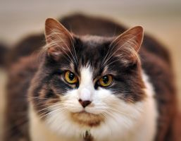 Cat Portrait 1 by greglief
