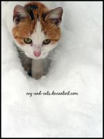 362 by evy-and-cats
