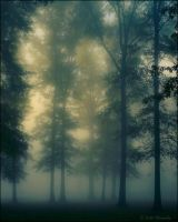 Tall Trees and Fog by bamako
