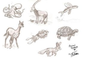 Animal Sketches by rue789