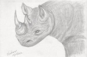 Black Rhino by shaharw