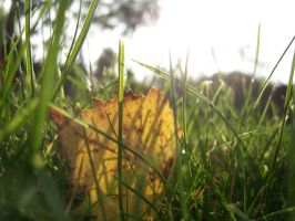 leaf in the grass by evanna11