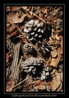Pinecone Litter by kayaksailor