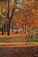 A Walking Path And Park Benches by dardaniM