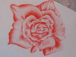 Red Rose by Annaa998