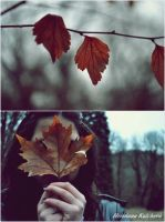 I love autumn . by drop-of-imagination