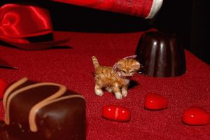 1/12 scale miniature ginger kitten in motion by carine-cote