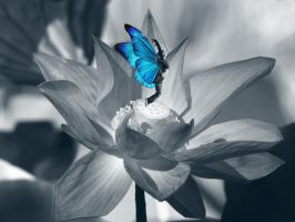 Butterfly by Irencia