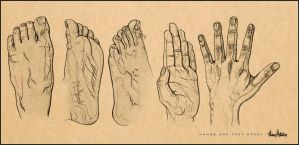 Detailed Hand And Feet Study. by AaronMetallion