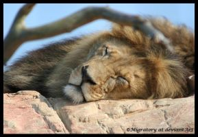 Snuggly... by Migratory