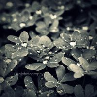 drop drop by KCELphotography