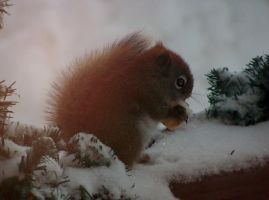 hungry squirrel by Cainamoon