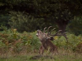 Red Deer 01 - Sept 10 by mszafran