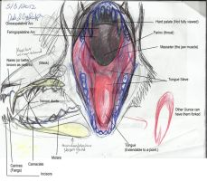 Concept for main artist's opinion (oral cavity) by Nakumah