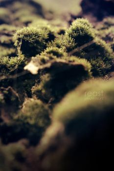 ...the moss... by reastphoto