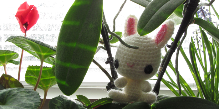 Bunny in the jungle! by KoNFo