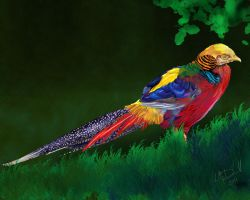 Golden Pheasant by hydraa