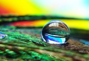 drop on peacock feather 1 by lindahabiba