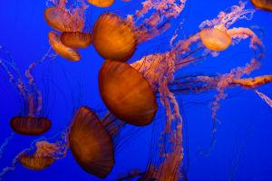 Jellyfish by ernieleo