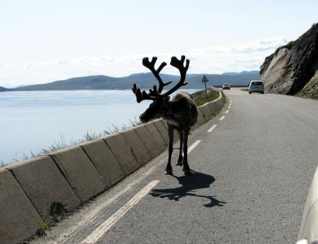 King Of Norwegian Roads by yuppern