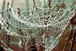 Web in dew by erynrandir