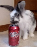 Dr. Pepper Bunny 3 by shastasnow