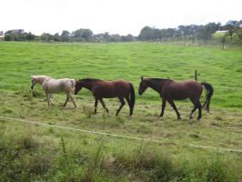 Horses Collection: Grouped 1 by Germanstock