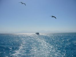 on boat by sweet-frog