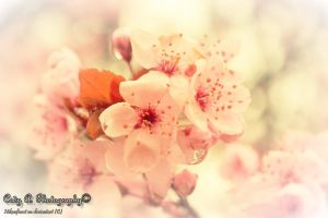 Spring promises by Nikonfinest