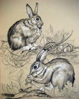 Cotton Tail Bunny Sketch by HouseofChabrier
