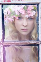 Through the Glass Window by EmilySoto