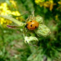 Lady Bug by Kassyselska