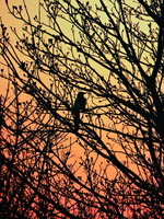 Magpie Sunset -2- by IoannisCleary