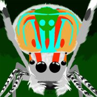 Peacock Jumping Spider by TadCougar