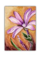 Epilobium Brachycarpum ACEO by Dusty-Feather